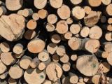 Predelava lesa v lesne brikete